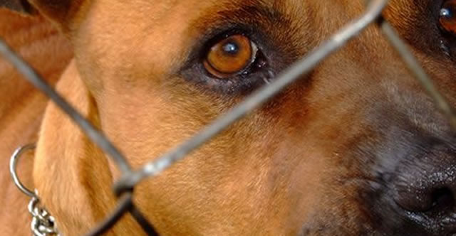 perros_peligrosos_yop